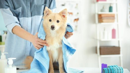 At our salon, we shampoo, condition and style your dog's coat.