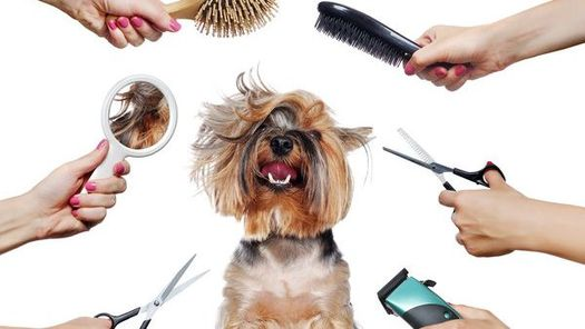 The many ways we can groom your pet